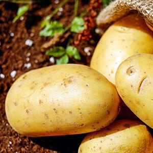 Entsafter-Rezept: Kartoffel-Karotten-Birnen-Saft | EUJUICERS.DE